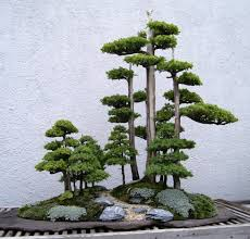 Guide To 's Bonsai A Tree Care Beginner waCqaEB