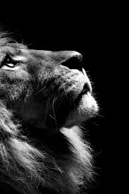 lion roaring black and white. Modren Roaring Reminds Me So Much Of Dearly Departed Kirby That It Made Cry  Animals  Pinterest Animals Lion And Cats Throughout Roaring Black And White T