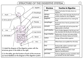 Digestive System Flow Chart Worksheet 42 Accurate Digestive System Flow Chart Answers