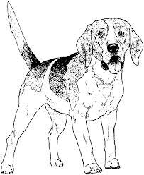 Large Beagle Dog Coloring Pages Hq Uncategorized Image Free Dog