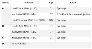Chicks Vaccination Chart Study Shows Vaccination Programmes Containing Both Ai And Ib