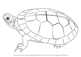 Small Picture Learn How to Draw a Painted Turtle Turtles and Tortoises Step by