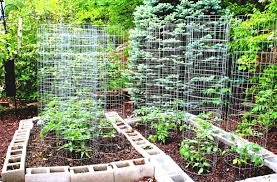 Create Kitchen Garden Best Tips To Create Diy Vegetable Garden With Wooden Fences