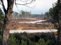 deforestation in south america gap year
