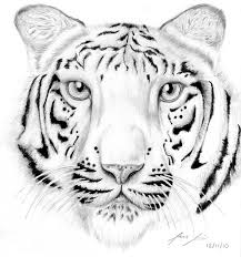 Small Picture Tiger Coloring Pages Printable Latest Disney Animals Baby Bear
