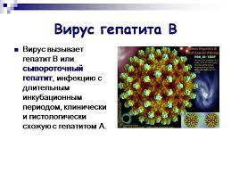 Вирусные гепатиты a b c d e и методики их лечения Вирус гепатита В
