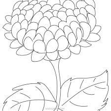 Bộ tranh tô màu hoa cúc tổng hợp đầy đủ nhất cho bé ✔️Cẩm Nang Tiếng Anh ✔️