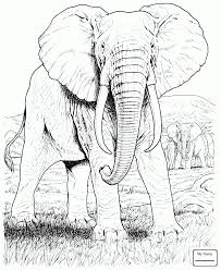 Elephant And Baby Drawing At Getdrawingscom Free For Personal Use