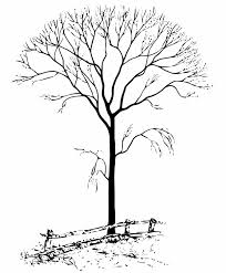 Fall Tree Coloring Page Bing Images