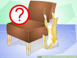 aid v4 728px Stop a Cat from Scratching a Leather Sofa Step 4 Version 2
