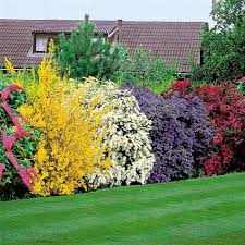 Backyards  Cool Trees For Small Backyards 11 Front Yard Landscape Good Trees For Backyard
