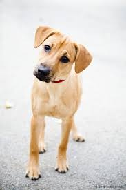 humane society dogs for adoption. Adopt Dog To Humane Society Dogs For Adoption