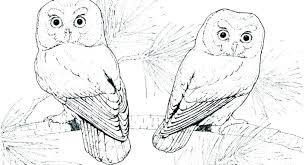 Realistic Bird Coloring Pages Star Wars Angry Birds Coloring Pages