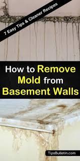 mold remover basement walls