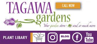 denver nursery tagawa gardens
