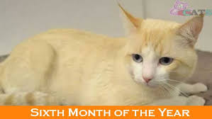Cat Weight Chart By Month Cat Growth Chart And The Growth Of Cats
