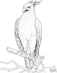 Small Picture Changeable or Crested Hawk Eagle coloring page Free Printable