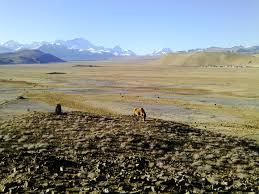 Plateau tibétain