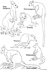 Small Picture Wallaby Animal Coloring Pages Australian Desert Animals Colouring