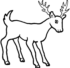 Small Picture coloring pages draw a deer 8 pics of easy draw deer coloring page
