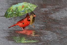 """Résultat de recherche d'images pour """"gifs sous la pluie"""""""