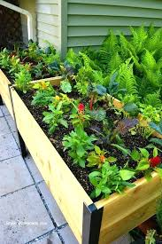 best plants for raised garden beds plants for garden beds best elevated garden beds ideas on best plants for raised garden beds