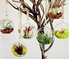 6pcs set hanging air plant holder 10cm globe terrariums 4 5 inch indoor garden