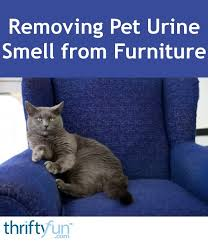 removing pet urine smell from furniture