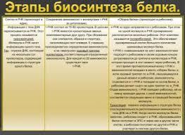 РЕАБИЛИТАЦИИ ЭТАПЫ это что такое РЕАБИЛИТАЦИИ ЭТАПЫ определение  Этапы биосинтеза белка