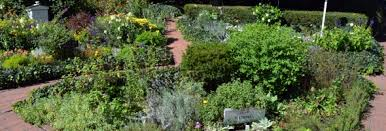 Small Picture Culinary Herb Garden design idea Landscaping Gardening Ideas