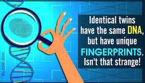 How To Read A Dna Fingerprint Chart A Step By Step Explanation Of The Dna Fingerprinting Process