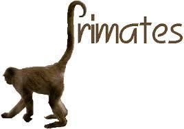 primates க்கான பட முடிவு