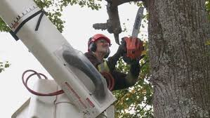 Island tree removal company 'can't keep up' with calls after Dorian | CBC  News
