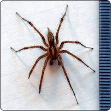 Spiders Commonly Found In Gardens And Yards Susan Masta