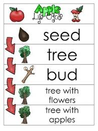 3 Apple Life Cycle Charts And Worksheets Preschool 1st Grade Homeschool
