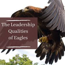 Eagles Pride Light 5 Positive Leadership Traits People Can Learn From Eagles