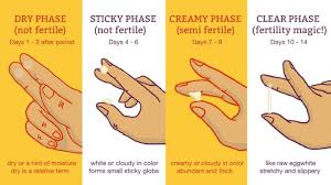 Cervical Mucus Chart Example Pin On Help Body