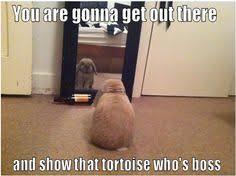 Rabbit Memes on Pinterest | Funny Bunnies, Bunny Meme and Rabbit via Relatably.com
