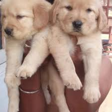 dog free adoption in hyderabad breed dogs picture