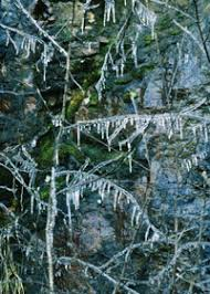 Freezing Temperature How To Protect Your Garden From Frost And Freeze Todays Homeowner