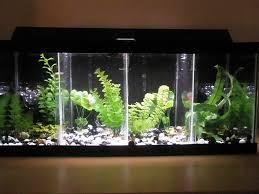 full size of fish tank impressive gallon long picture concept diy divided betta 49 impressive fish