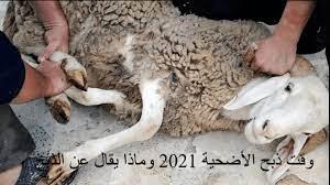 وقت ذبح الأضحية 2021 وماذا يقال عن الذبح وما أفضل يوم لذبحها وأخر يوم -  ثقفني