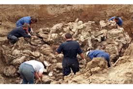 Image result for کشف گورهای جمعی متعلق به شیعیان در موصل با 500 جسد