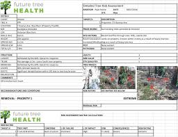Commercial Solutions For Your Trees Future Tree Health