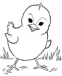 Chick Coloring Sheet Fixyaridersclub