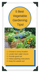 5 best tips for raised bed gardening success
