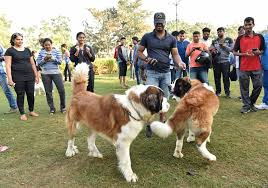 dog breeders streamlining activists term centre s notification a historic step photo hrudayanand