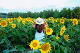 Where to Find the Most Beautiful Sunflower Fields Near St. Louis | Bangles  & Bungalows