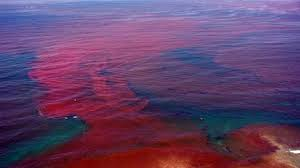Current Red Tide Report For Florida