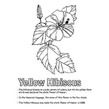 Small Picture Top 10 Hawaiian Coloring Pages For Toddler
